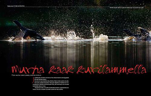 Luontokuva-lehti 1/2012